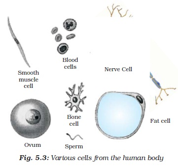 NCERT Class IX Science Chapter 5 The Fundamental Unit of Life