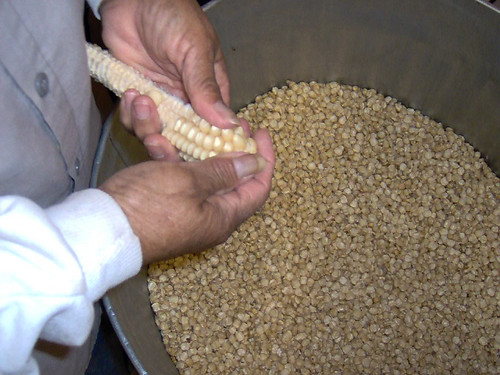 A member of the Mississippi Band of Choctaw Indians removes the kernels from a corn of cob, one step in the hominy-making process.