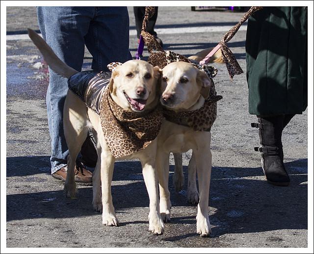 Soulard Pet Parade 2013-02-03 2