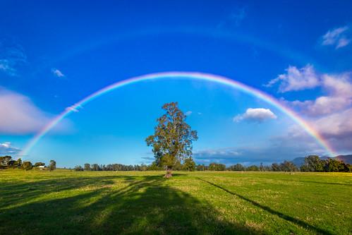 Berry Rainbow