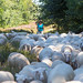 Herding Sheep by Bas Bloemsaat