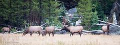 Yellowstone Sept 2016