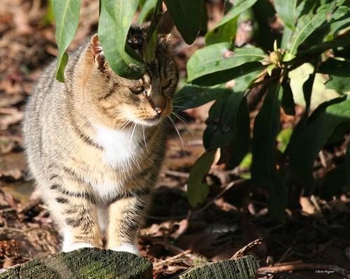 A Cat In The Jungle