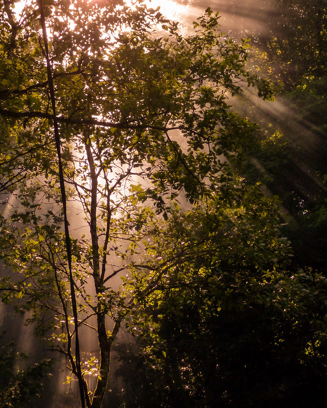 Lumière d'ambiance en forêt... 8272576507_b80c91908a_c