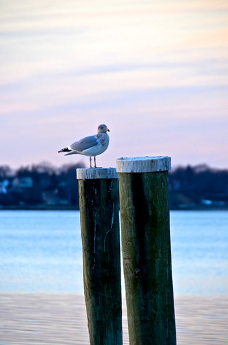 Seagull by Bell7283 via I {heart} Rhody