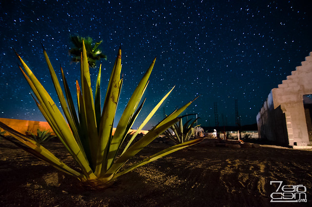 Agave at night