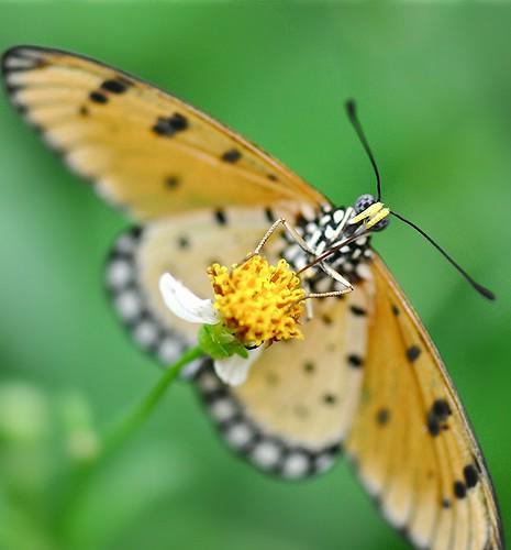 macro art nature butterfly singapore