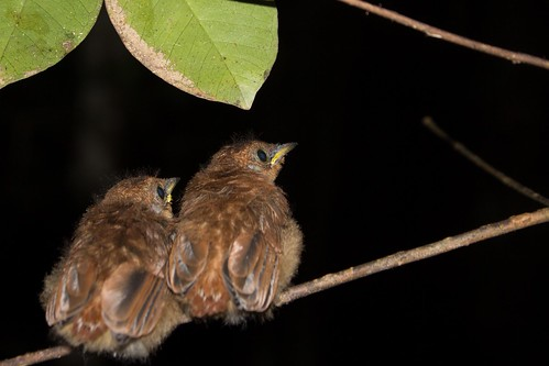 Birds, Madagascar