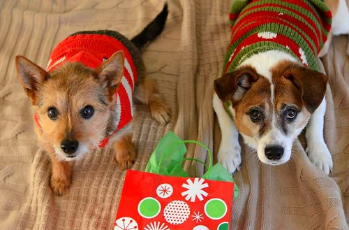 Merry Christmas from Bella & Tavish!