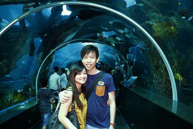 RWS S.E.A Aquarium 420