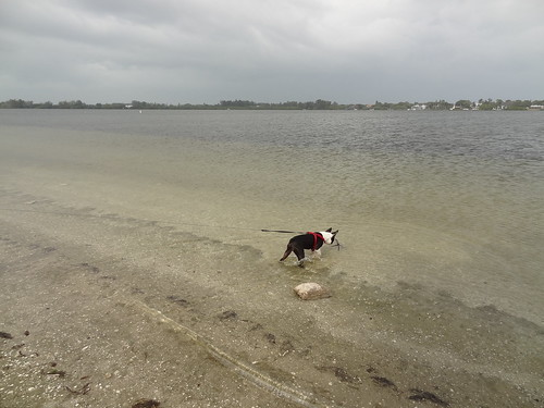 charlie at florida beach 2012 (3)