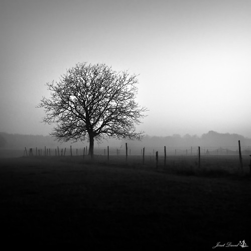 temps de brouillard by barbatruk