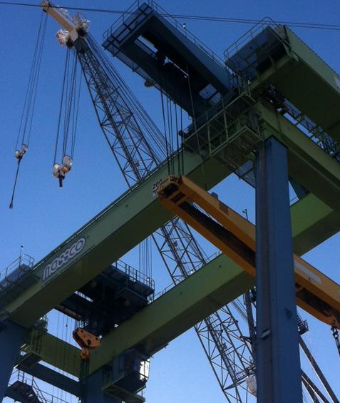San Diego Cranes