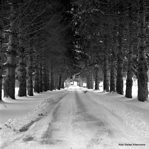 road trip trees winter bw white snow black cold tree 6x6 tlr film ice composition mediumformat season square landscape newjersey december kodak tmax pennsylvania path side country grain perspective nj entrance scan iso pa negative 400 epson kodaktmax400 2012 honesdale 80mm kodakhc110 yashica12 yashinon80mmf35 epsonv600 epsonperfectionv600