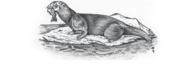 NCERT Class X English: Chapter 8 - Mijbil the Otter