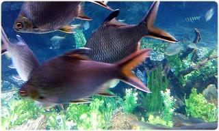 Ikan SeaWorld