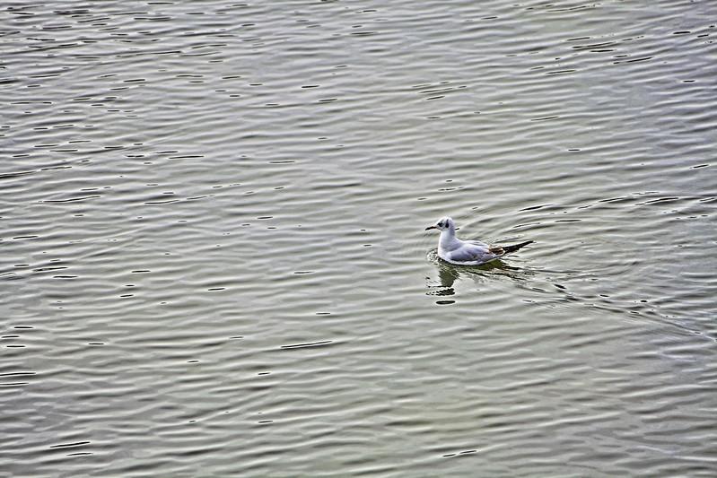 buscando el mar en el río Manzanares 19/365