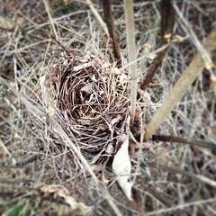 Empty #nest.