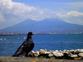 Vesuvio con piccione