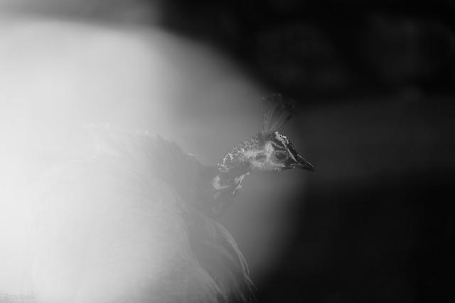 Photo:くらがりをつつくひかり By atacamaki