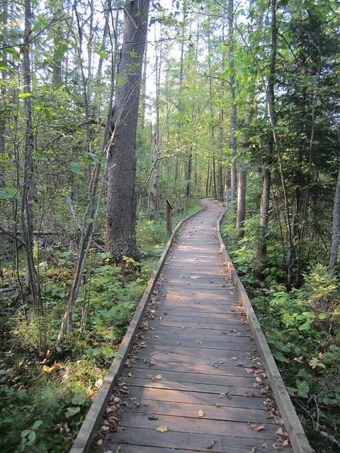 Another Section of the Trail