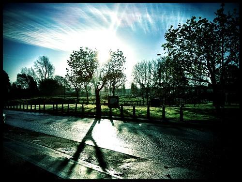road trees ireland nature glow suburb limerick castletroy