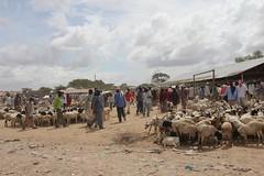Camel Market (23)