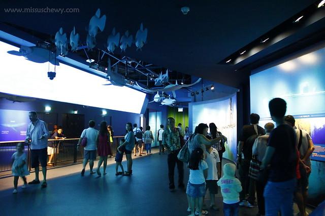RWS S.E.A Aquarium 437