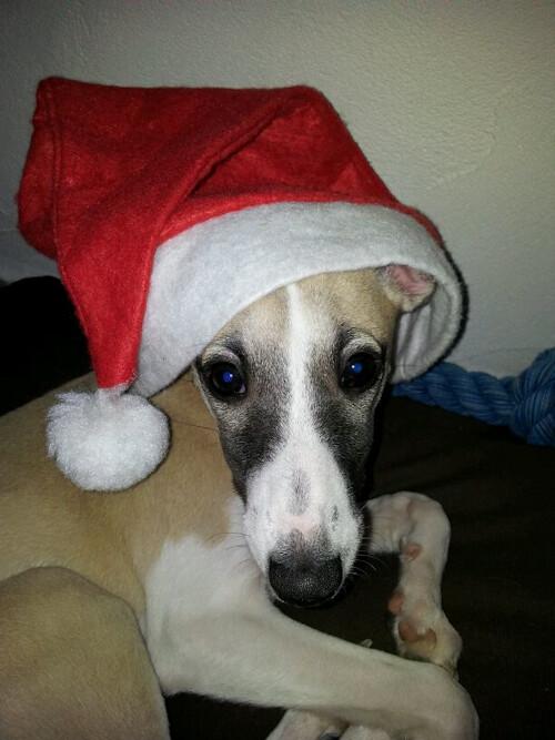 Channie Weihnachten 2012