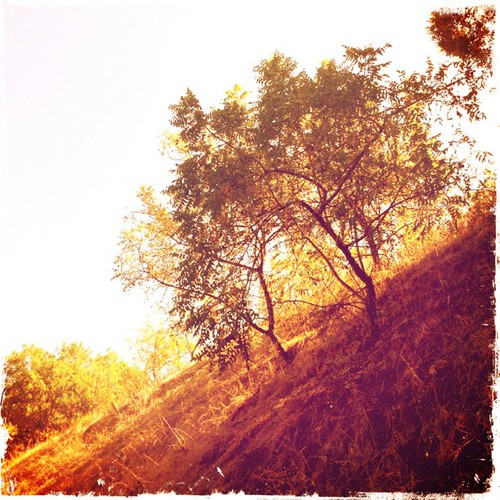 trees sunset shadow jj hill iphone joshjohnson vdh iphone4 thisiscalifornia iphonephotography iphoneography igers iphoneonly hipstamatic instagram statigram jjforum instadaily jjchallenge instagramhub instagood uploaded:by=flickstagram jamesfavourites instagram:photo=27679253023031 instagram:venue_name=pomona instagram:venue=5578685