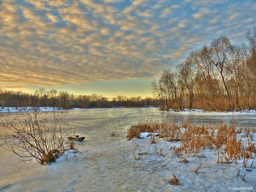 winter light sunset sky cloud sunlight snow tree ice beach reed nature water cane creek river landscape lumix golden evening frozen bush scenery frost branch grove magic bank ukraine panasonic rush hour twig shrub kiev hdr magichour goldenhour duckweed backwater copse dnieper photomatix nondslr