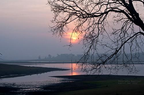 sun india reflection tree nature silhouette nikon scenery rise karnataka kabini backwater nagarhole sunsrise d90 bushbetta thebison