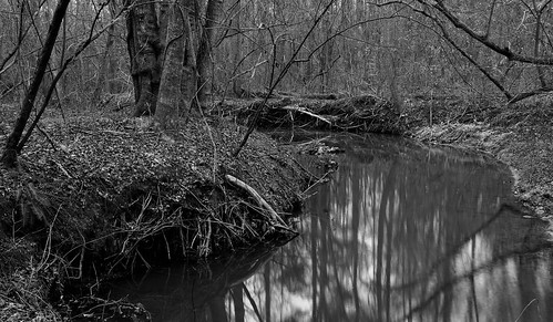 blackandwhite nature water creek forest reflections georgia landscape