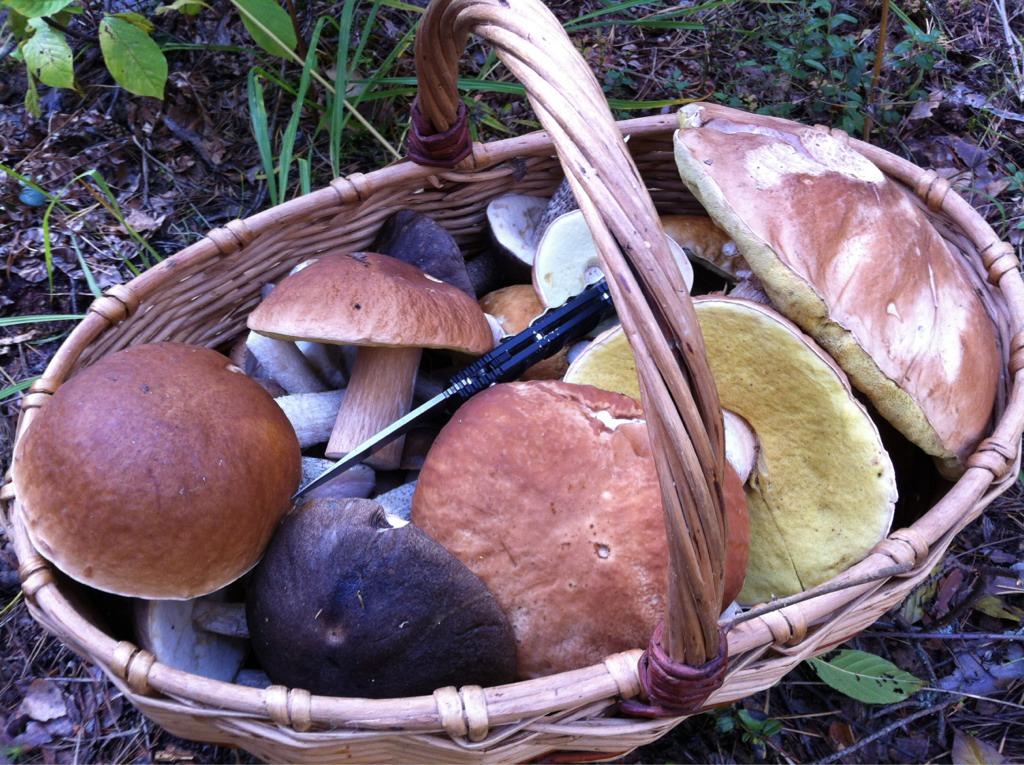 Полная корзина грибов
