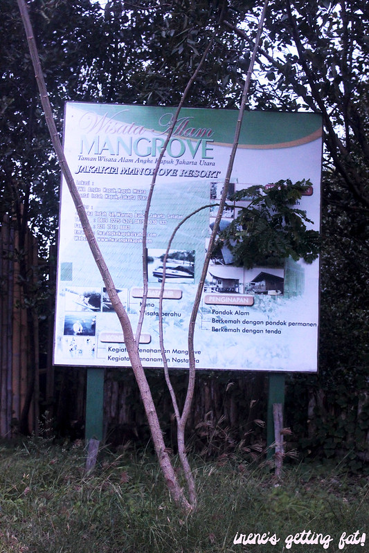 mangrove-conservation