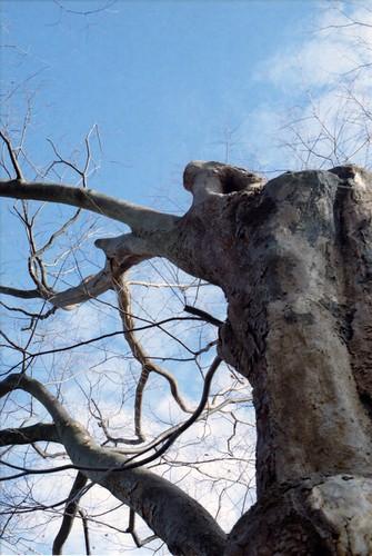 神さんの木