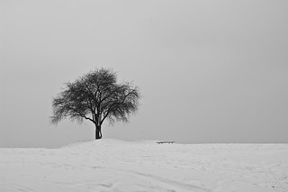 Lonely winter