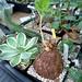 foto plantas colindres 1