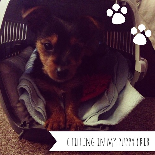 puppycrib