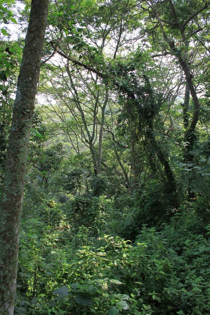 metsää