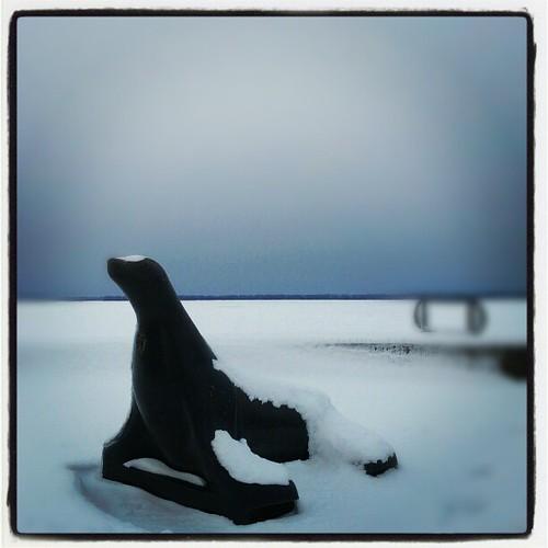 #seal #dobbinslanding #eriepa #erie #eriegram #snow #moresnowpictures #ice #frozen