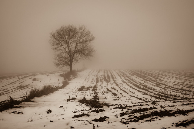 Foggy, Fog, Field, Farm, Rural, Tree