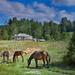 Ορεινό λιβαδάκι Mountainy grassland