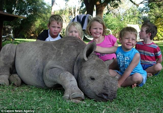 rinoceronte3-diarioecologia