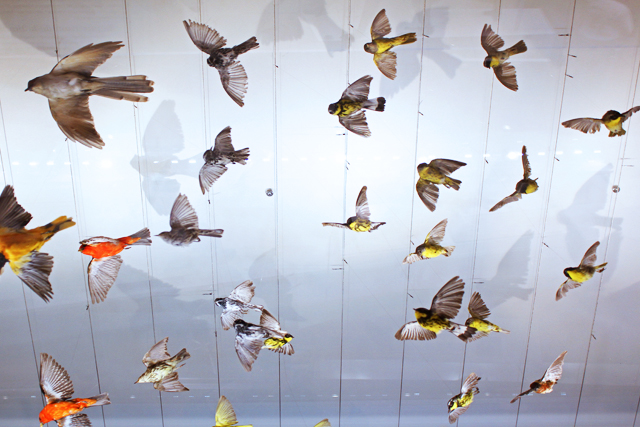Birds on display