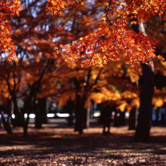 暖色の枝先