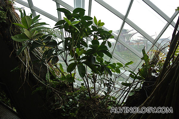 The window openings are covered with plants too