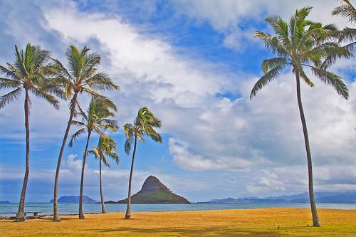 sea sky beach water clouds hawaii islands coast oahu shoreline blues aeroplane palmtrees pacificocean coastline legacy windward mokolii kaneohebay aquas kualoapoint virtualjourney marculescueugendreamsoflightportal virtualjourney2 aliaschinamanshat