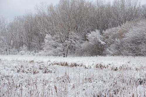 Snowy Wetland