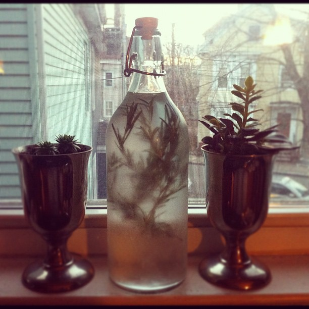 "#DIY rosemary aka ""The Christmas Herb"" vodka, made using @alabamachanin recipe while @adubeau naps #holidays #infused #diyboston"